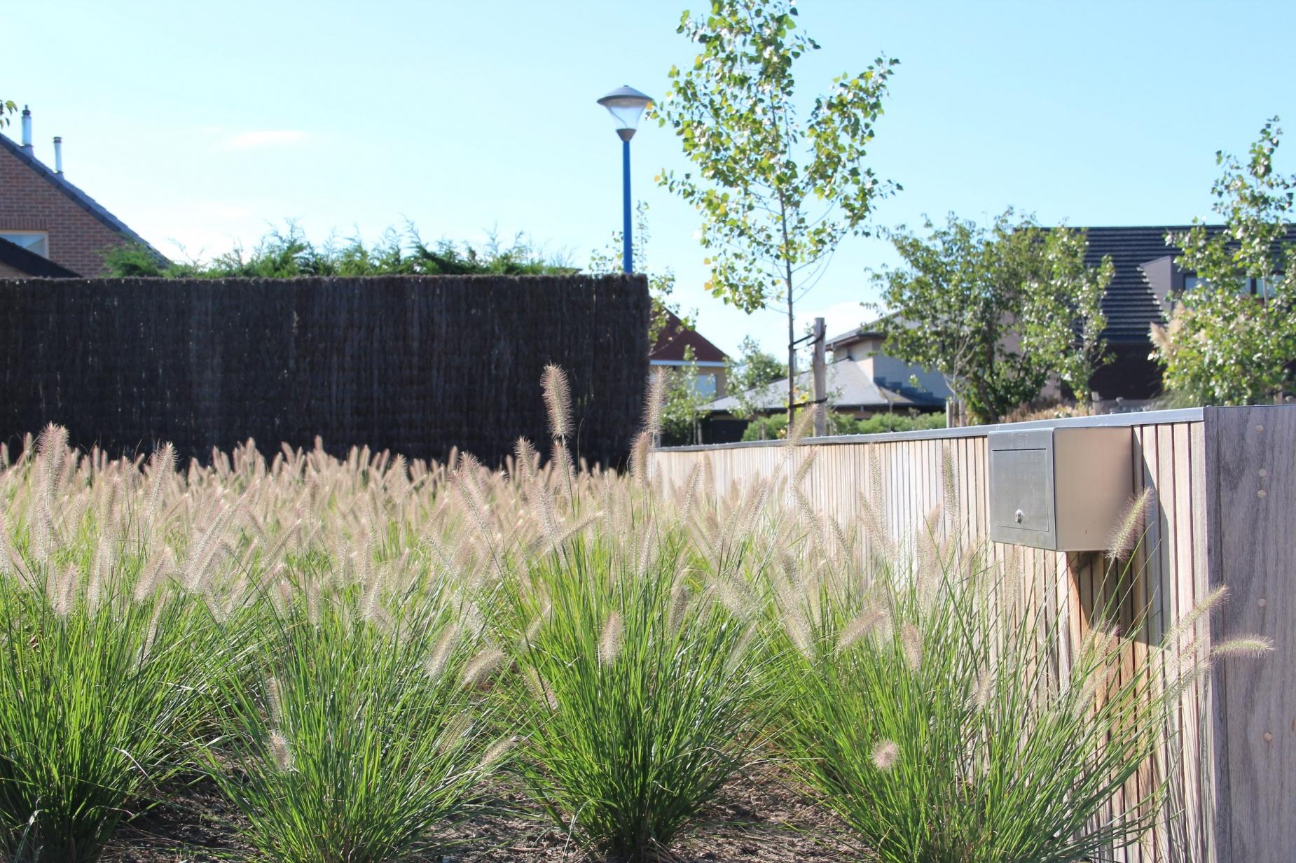 Aanleg van tuinen met natuurlijk grassen i archituin